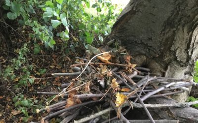 Read more about Den/habitat building at Forest School!