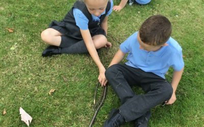 Read more about Year 1 Forest School