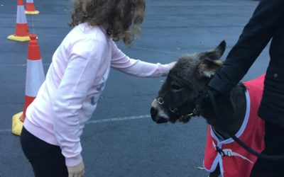 Read more about Year 5 meet Little Donkey